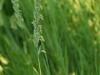 Grass ...