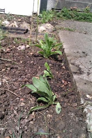 Marigolds near front door